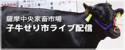 薩摩中央家畜市場_子牛せり市ライブ配信