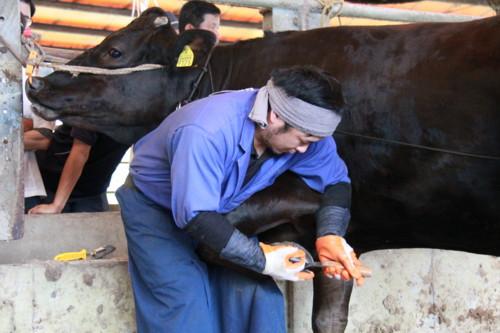 家畜 曽於 市場 中央